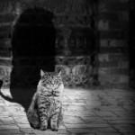 cat-564202_640